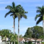 Tree Service Davenport FL